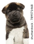 american akita puppy isolated... | Shutterstock . vector #789571468