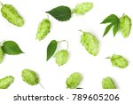 Hop Cones With Leaf Isolated On ...