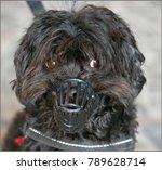 little dogs are often... | Shutterstock . vector #789628714