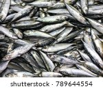 fresh mackerel fish in market   ... | Shutterstock . vector #789644554