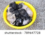 baby pug dog laying in yellow... | Shutterstock . vector #789647728