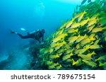 scuba diver watches a big swarm ...   Shutterstock . vector #789675154