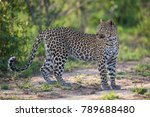a horizontal  colour photo of a ... | Shutterstock . vector #789688480