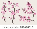 sakura. pink cherry blossom... | Shutterstock .eps vector #789690313