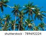 Coco Palm Tree Tropical...