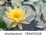 lotus flower or water lily... | Shutterstock . vector #789692428