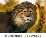 lion king portrait | Shutterstock . vector #789696838