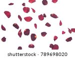 Dry Rose Petals On White...