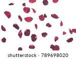 dry rose petals on white...   Shutterstock . vector #789698020