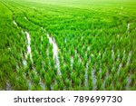 rice plantation in valencia ...   Shutterstock . vector #789699730