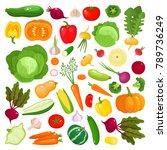 bright vector illustration of... | Shutterstock .eps vector #789736249