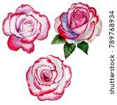 wildflower hybrid rose flower... | Shutterstock . vector #789768934