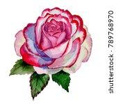 Wildflower Hybrid Rose Flower...
