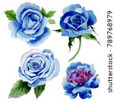 Wildflower Blue Rose Flower In...