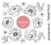 Collection Peony With Line Art...