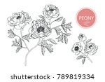 collection peony with line art... | Shutterstock .eps vector #789819334