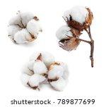 cotton white delicate dry... | Shutterstock . vector #789877699