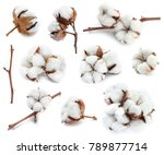 cotton white delicate dry... | Shutterstock . vector #789877714