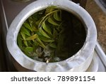 asian traditional herbal leaf... | Shutterstock . vector #789891154