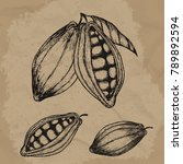 cocoa beans hand drawn... | Shutterstock .eps vector #789892594