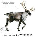 caribou. reindeer watercolor... | Shutterstock . vector #789922210