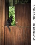 black shorthair cat sitting... | Shutterstock . vector #789934573