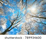 forest in winter with snow... | Shutterstock . vector #789934600