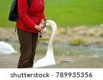 mute swan  cygnus olor  being... | Shutterstock . vector #789935356
