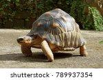 Portrait Of Radiated Tortoise...