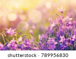 Colorful Floral Background With ...