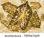bleeding heart vintage  leaf ... | Shutterstock . vector #789967609