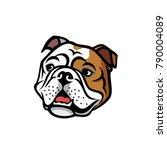 english bulldog face   isolated ... | Shutterstock .eps vector #790004089