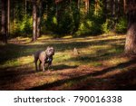 puppy of purebred american... | Shutterstock . vector #790016338