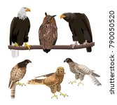 Birds Of Prey. Set Of Vector...