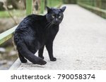 Stock photo the black cat perched on the bridge 790058374