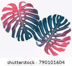 green leaf of a tropical flower ... | Shutterstock . vector #790101604