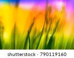 dew drops on a morning grass... | Shutterstock . vector #790119160