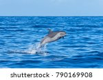 pan tropical spotted dolphin ... | Shutterstock . vector #790169908