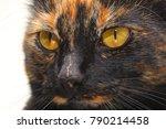 Tortoiseshell Cat Close Up
