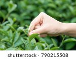 asian woman hand picking up the ... | Shutterstock . vector #790215508