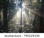 sunshine in the morning in... | Shutterstock . vector #790229230