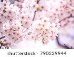 mt.fuji in kawaguchiko lake... | Shutterstock . vector #790229944
