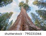 giant sequoia trees in kings...