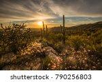 it's spring in the sonoran...   Shutterstock . vector #790256803