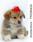 cute red corgy puppy in a small ... | Shutterstock . vector #790286626