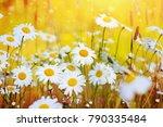 summer landscape with beautiful ...   Shutterstock . vector #790335484