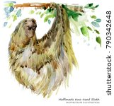 sloth. tropical animal... | Shutterstock . vector #790342648