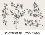 sakura. cherry blossom branch.... | Shutterstock .eps vector #790374208