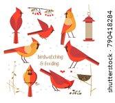 birdwatching  bird feeding icon ... | Shutterstock .eps vector #790418284