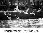 seagulls flying over the harbor ... | Shutterstock . vector #790435078